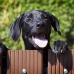 IELTS Writing: Letter-Complaining about a dog