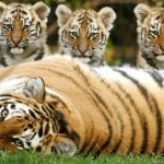 IELTS Writing: Protecting animals